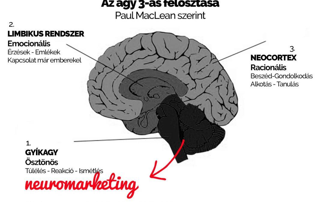 Neuromarketing: 6 tényező, amivel hatni tudsz az emberekre